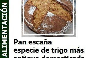 Pan_escana