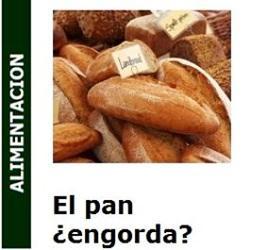 Alimentacion – El pan ¿engorda?