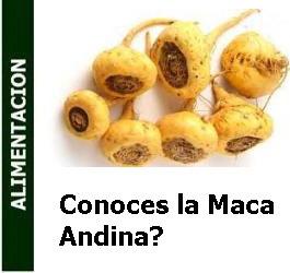 conoces_la_maca_andina_Portada