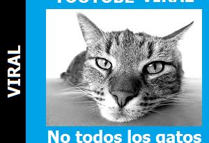 No_todos_los_gatos_tienen_agilidad_Portada